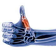 anatomisch-duim