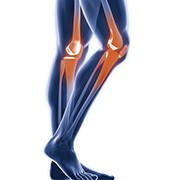 anatomisch-knie